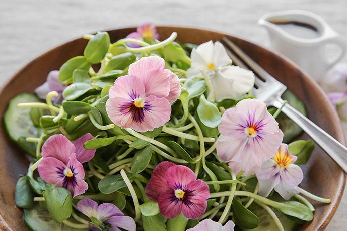 Ricette con i fiori - Prof. Nicola Sorrentino